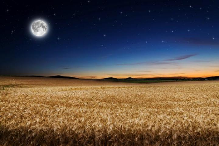 harvest-moon-field